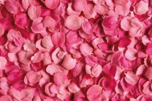 petales rose encens rituel magie