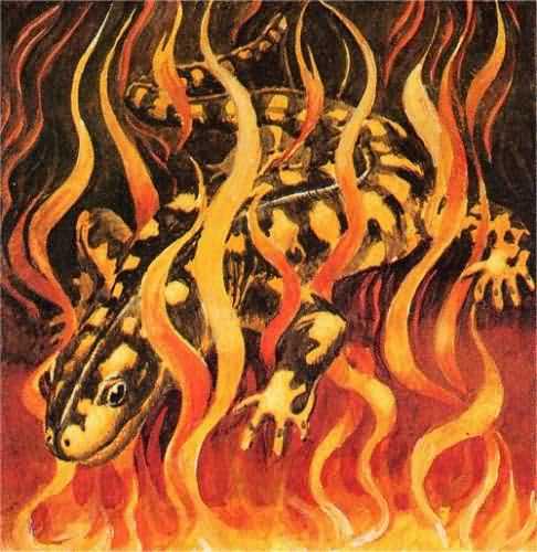 esprit feu salamandre encens rituel magie druide nature